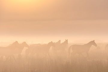 Konikpaarden in de mist op een mooie mistige lente ochtend in het nationaal park Lauwersmeer van Bas Meelker
