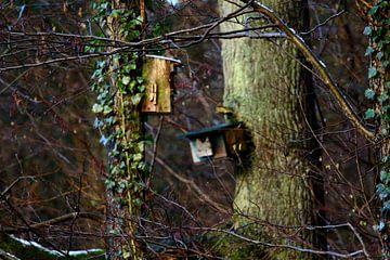 Het Vogelhuisje. van Møre To Explore.
