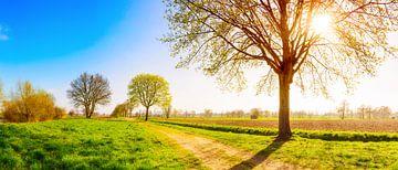 Le printemps dans l'Emsland sur Günter Albers