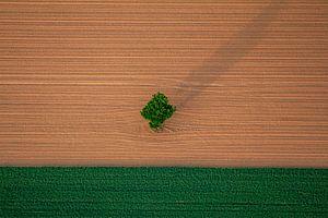 Landschap akker met boom
