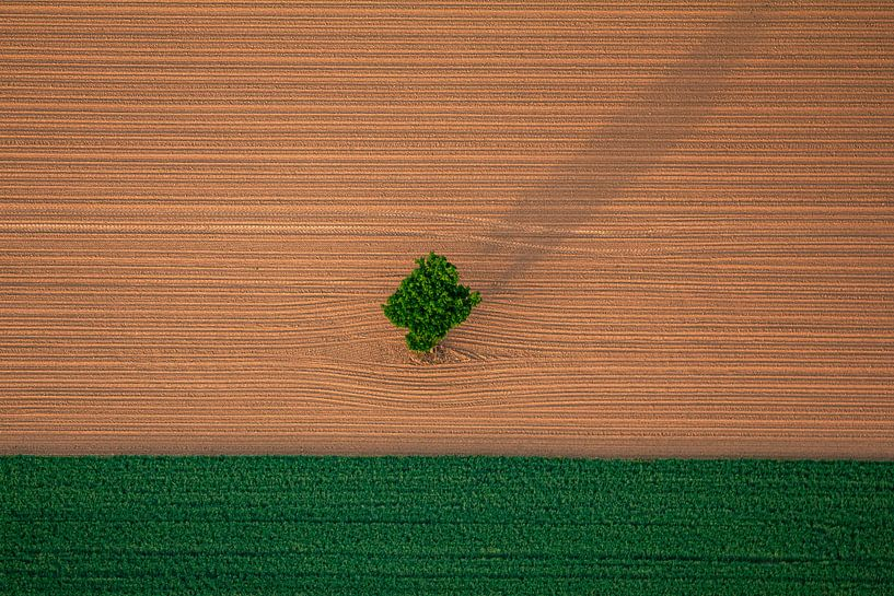 Landschap akker met boom van Kas Maessen