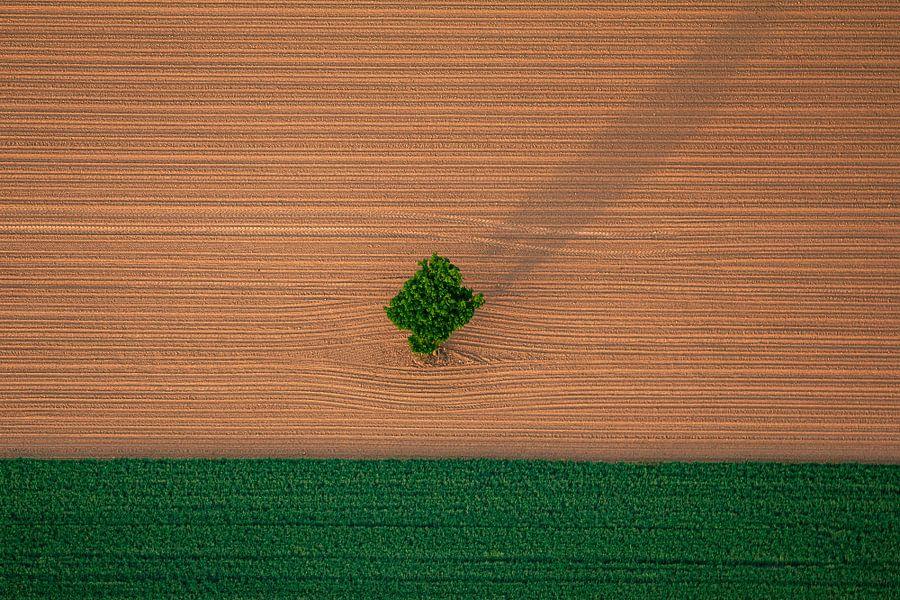 land with tree von Kas Maessen