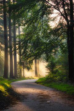 Der Weg zum Licht von Jamesrl Photography