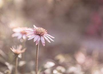 Blumen Teil 169