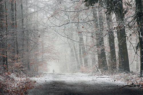 Winterwandeling in het bos van