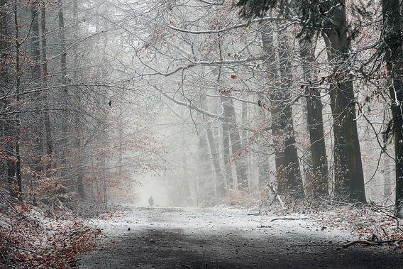 Winterwandeling in het bos