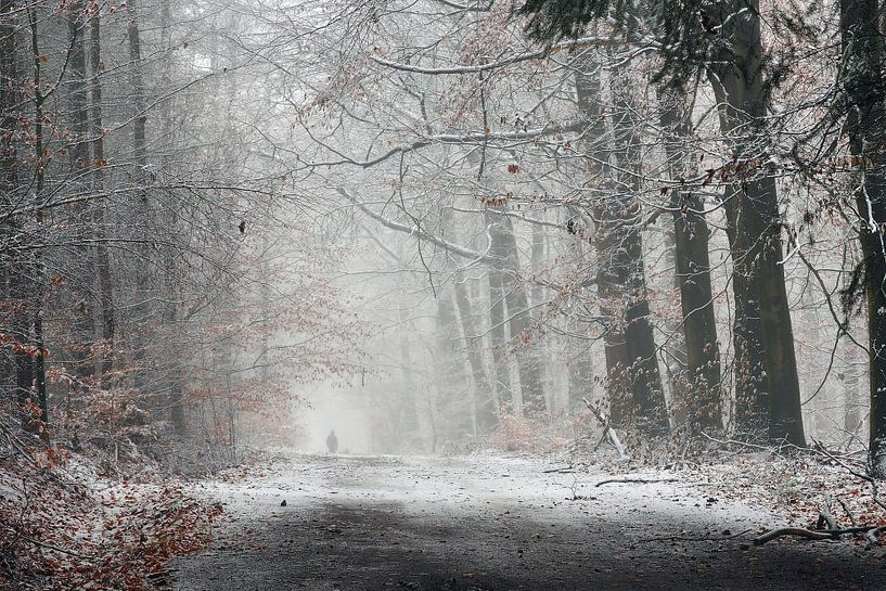 Winterwandeling in het bos van Paul Muntel