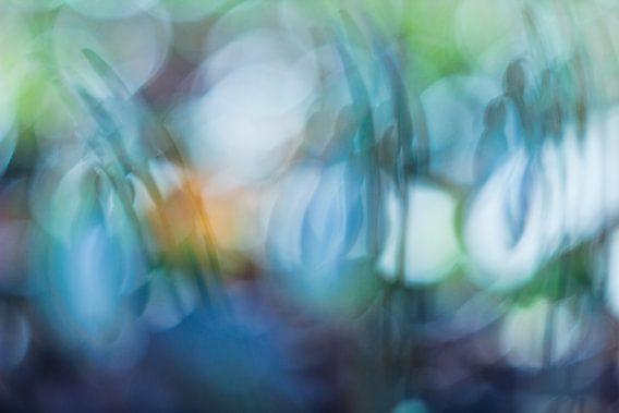 Color splash van Esther Smit-Branderhorst