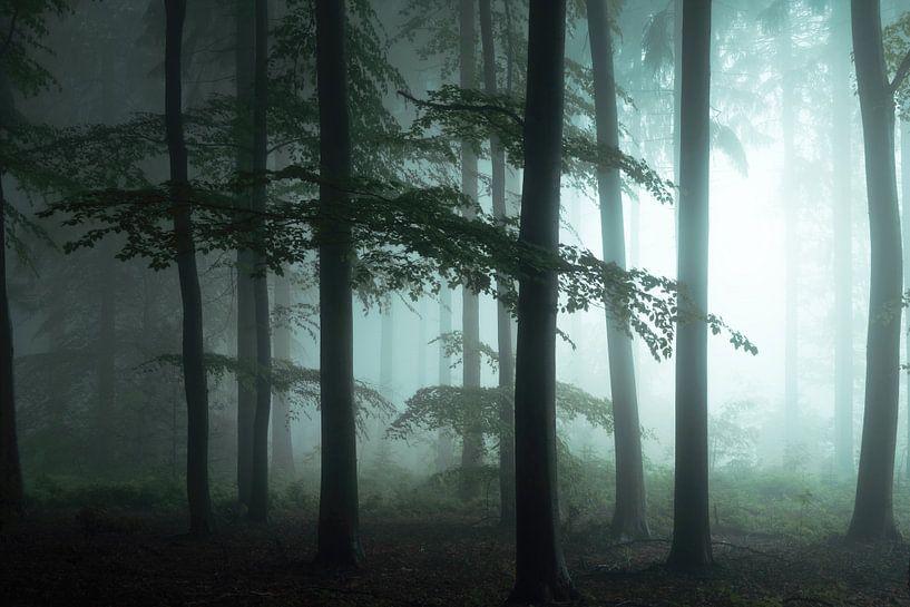 The Forest Awakens. van Inge Bovens