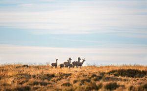 Edelherten op het Deelerwoud van Andy van der Steen - Fotografie