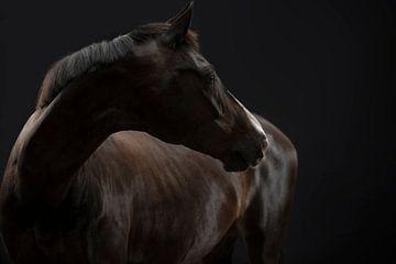 Paard van Annet van Esch
