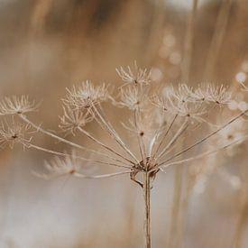 Bloem in de winter van Amber den Oudsten