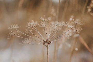 Blüte im Winter von Amber den Oudsten