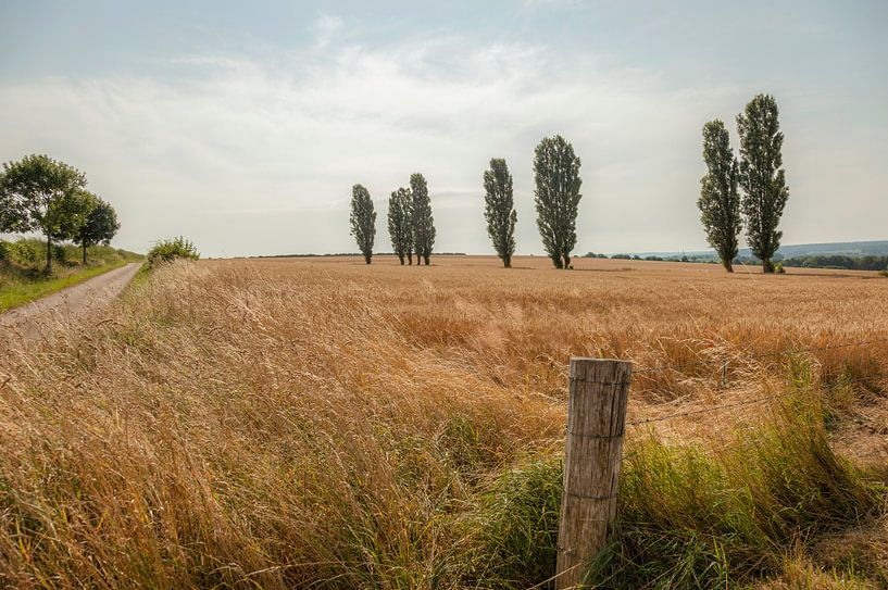 Eyser Heuvelrug van John Kreukniet