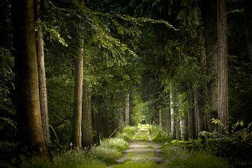 The Green Leaves of Summer van Kees van Dongen
