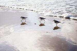 Strandlopertjes op strand