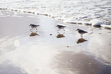 Strandlopertjes op strand van Ria Peene