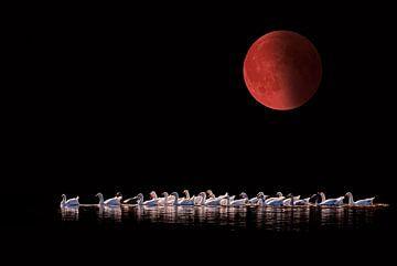 Bloedmaan 2015 van Tejo Coen