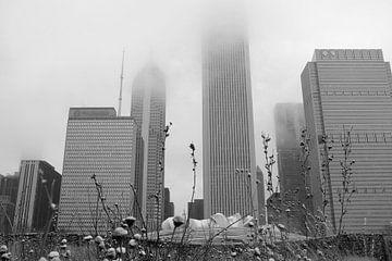 'Lurie Garden', Chicago van