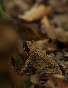 Frosch zwischen den Blättern von my KOOL moments