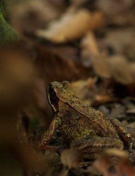 Frosch zwischen den Blättern von Danielle Kool