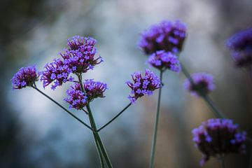 Paarse bloemen  van AnyTiff (Tiffany Peters)