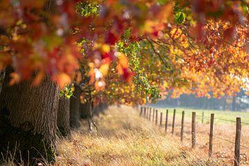 Kleurrijke bossen sur Miranda Snoeijen
