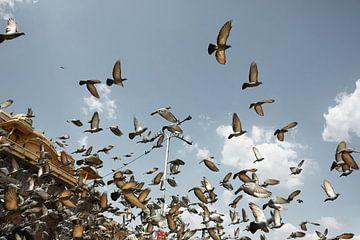 Pigeons volant devant le Hawaii Mahal Palace. Jaipur, Inde sur Tjeerd Kruse