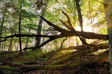 Gewoon bos van CSB-PHOTOGRAPHY