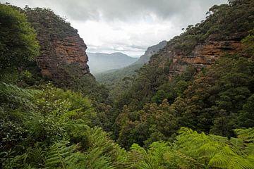 Blue Mountains Dschungel Schlucht von Jiri Viehmann