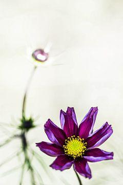 Paarse bloem van Roel Verver