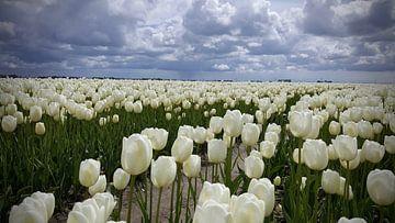 Weiße Tulpen unter einem grauen Himmel bewölkt von Rik van de Beek