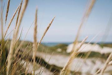 Seegras in den Dünen von Schoorl, entlang der niederländischen Küste | Fine Art Nature Photography i von Evelien Lodewijks