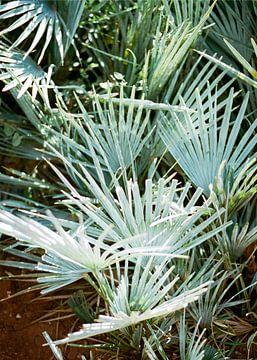 Blauw / groene palmbladeren in Marokko | Turquoise pastelkleuren | Botanische foto print van