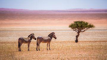 Zebra's en eenzame boom von Robert Riewald