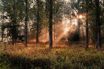 Sonnenlicht scheint durch die Bäume im Leeuwarder Bos von Nando Foto