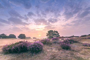Heidekraut Sonnenaufgang Aekingerzand von Stuart Dayus