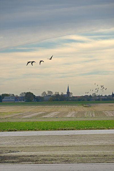 Friesland van Harrie Muis