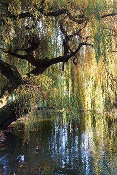 Im Park von Marion Engelhardt