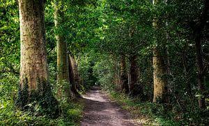 Wandeling door het bos van jacky weckx