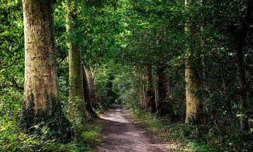 Spaziergang durch den Wald von jacky weckx