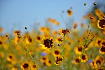 gelbe Blumen Achsen von Henriette Tischler van Sleen
