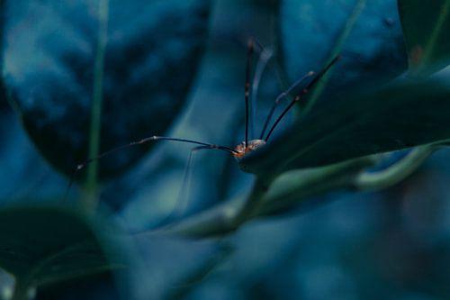 Mister Spider van