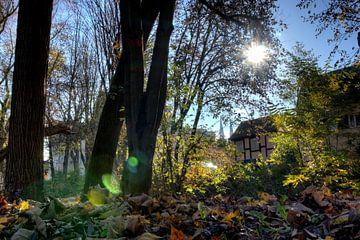Inselpark Oberer Wöhrd Regensburg en automne sur Roith Fotografie