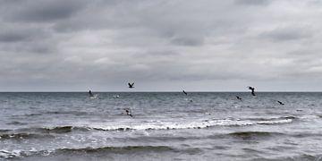 Flock of Seagulls van Jörg Hausmann