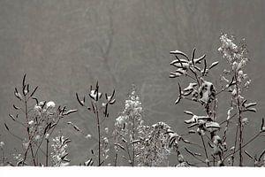 Wintertafereeltje van