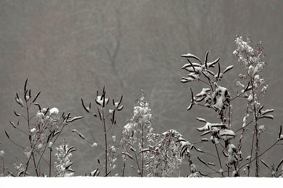 Wintertafereeltje
