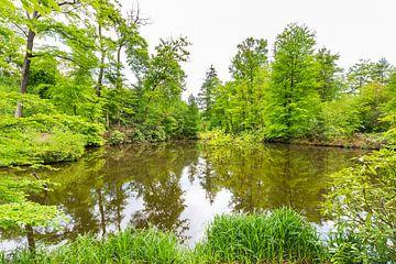Wasser vom Teich im grünen Wald in Frühling von Ben Schonewille