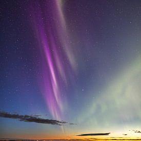 The Purple Wave von Freek van den Driesschen
