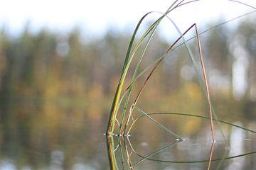 Pflanze der Ruhe von Remy Monteyne